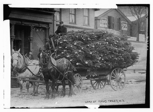 Horses hauling a load of Christmas trees to New York City