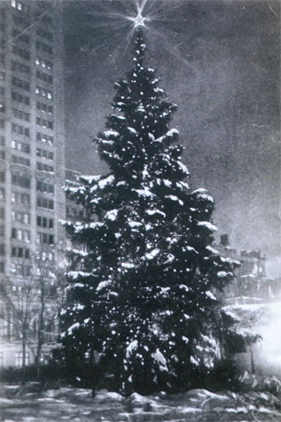 The Madison Square Christmas Tree, about 1912.