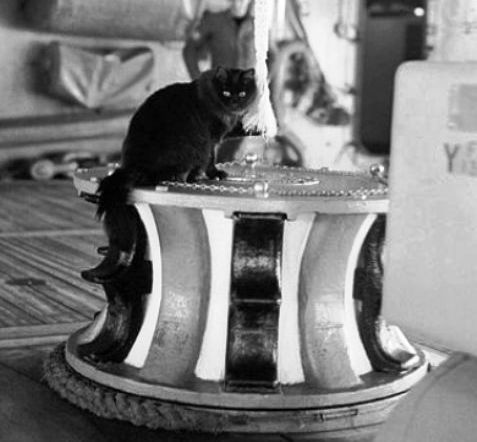 Not every cat born at the Brooklyn Navy Yard went off to sea. Some landlubber cats stayed back to control the rat population.