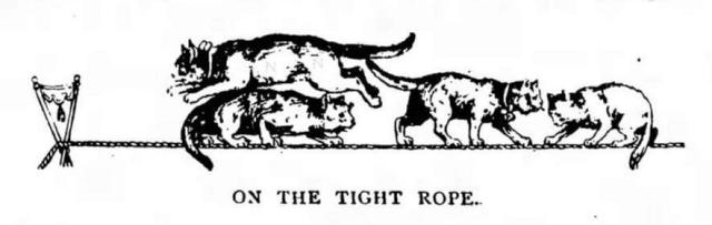 Herr Techow's trained cats