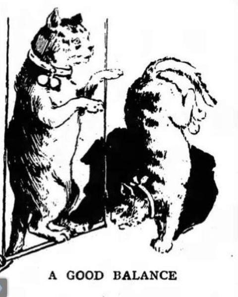 Herr Techow trained cats