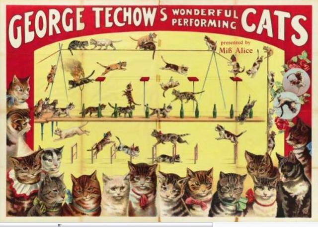 George Techow trained cats