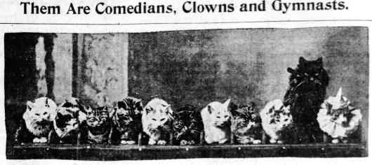 Herr George Techow's performing cats