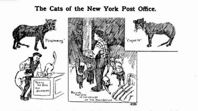 Cats-of-the-New-York-Post-Office_HatchingCatNYC