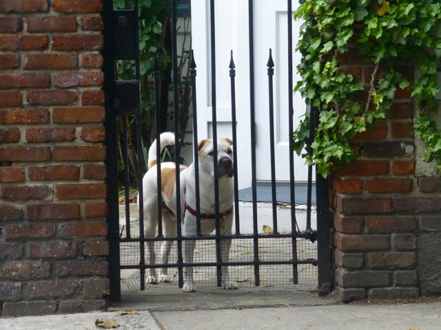 Or maybe you'll see him looking out from the wrought-iron fence. Photo courtesy of Judith E. Marsh.