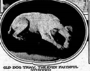 This photo of a stuffed pet dog appeared in the New York Telegram in 1911