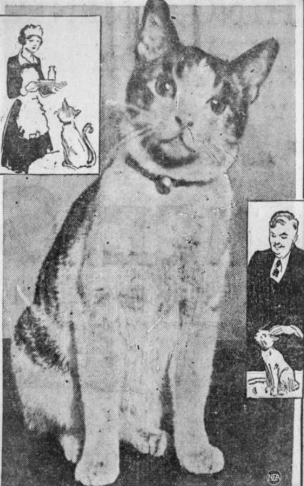 Abe, the mascot cat of the Hotel Lincoln, in 1928 or 1929.