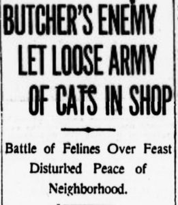 One of several headlines that appeared on November 5, 1914, the day after a clowder of cats went wild in the Brighton Beef Company butcher shop at 70 James Street.