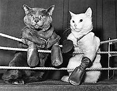 The gloves came off when about 25 cats were tossed into the butcher shop at 70 James Street on the evening of January 23, 1914.