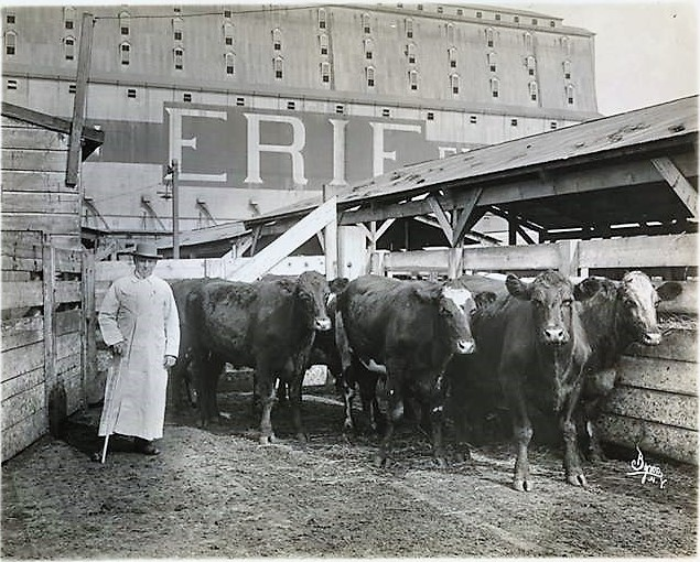 The cows that went wild on West Street in 1896 were being transported from Staten Island to the stock yards in Jersey City via the Erie Railroad's Pavonia Ferry. Here are the stock yards pictured in 1913. Museum of the City of New York Collections
