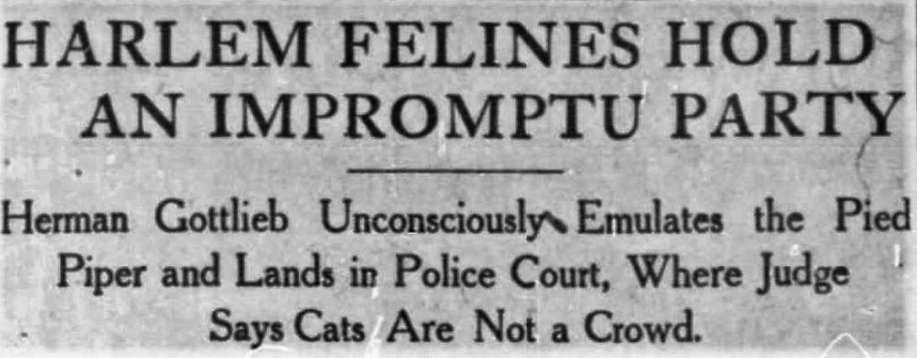 This headline about the great catnip caper appeared in the Washington Times on August 22, 1909.