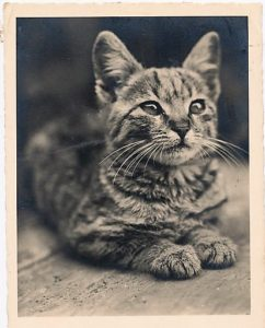1883: Ned, the First Cat to Cross Over the New Brooklyn ...